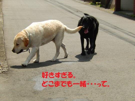 20140808-07.jpg