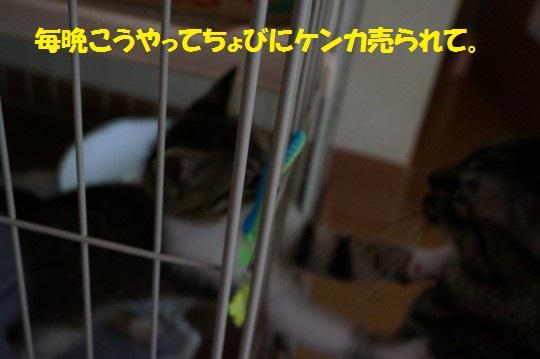 20140811-09.jpg