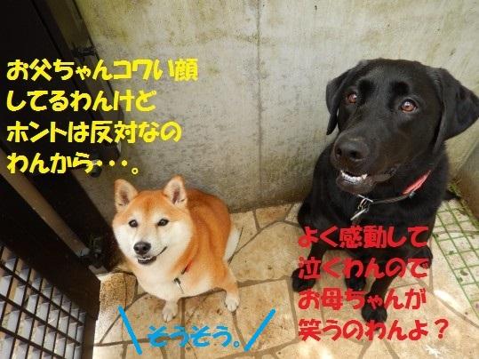 20140815-04.jpg