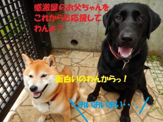 20140815-10.jpg