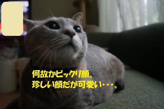 20140816-01.jpg