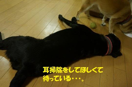 20140816-08.jpg