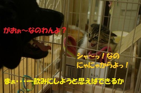 20140818-05.jpg
