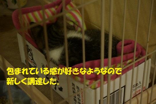 20140818-08.jpg