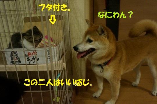 20140818-10.jpg