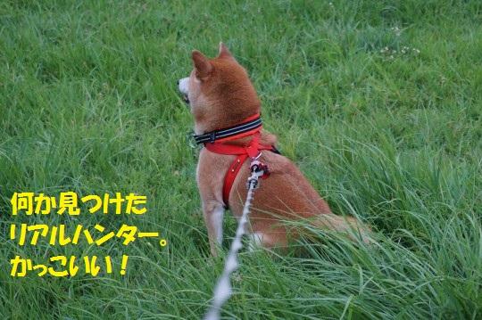 20140819-05.jpg