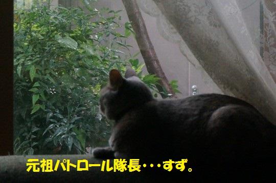 20140819-07.jpg