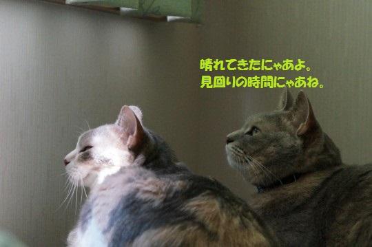 20140819-09.jpg
