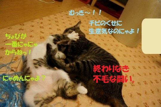 20140820-011.jpg