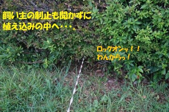 20140822-03.jpg