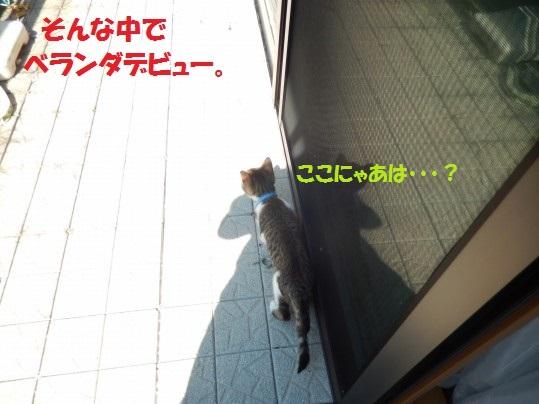 20140825-003.jpg