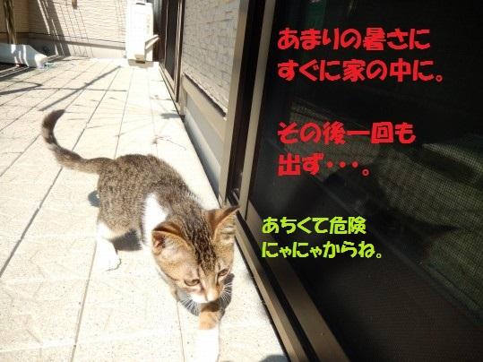 20140825-004.jpg