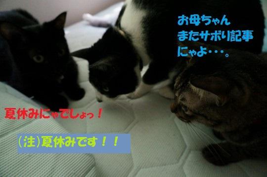 20140832-01.jpg