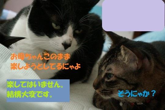 20140832-04.jpg
