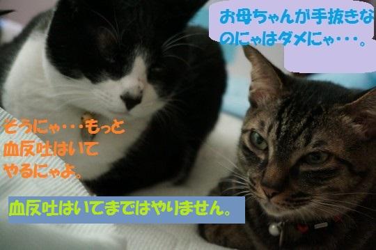 20140832-07.jpg