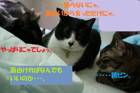 20140832-09.jpg