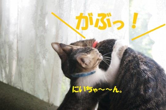 20140904-04.jpg