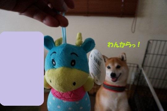 20140904-06.jpg