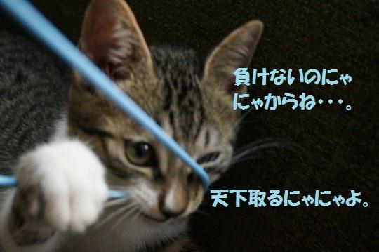 20140906-004.jpg