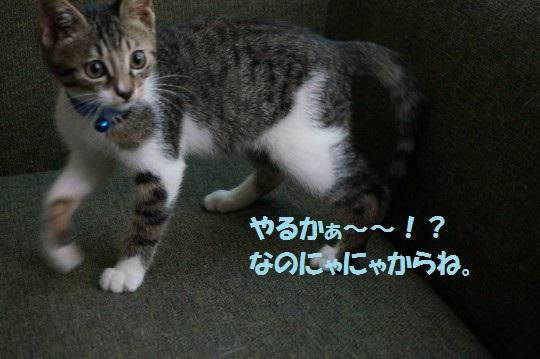 20140906-006.jpg