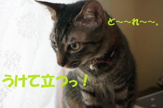 20140906-007.jpg
