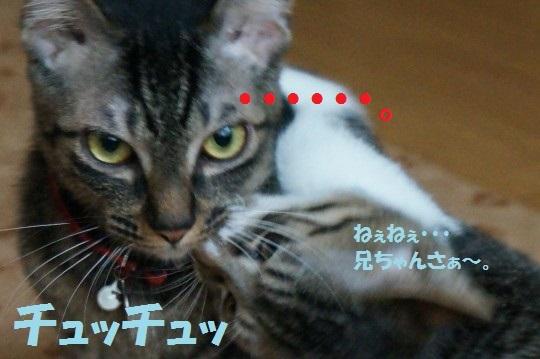 ちょびてん1-008