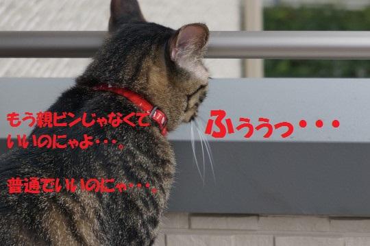 ちょびてん1-009