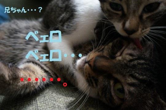 ちょびてん1-007