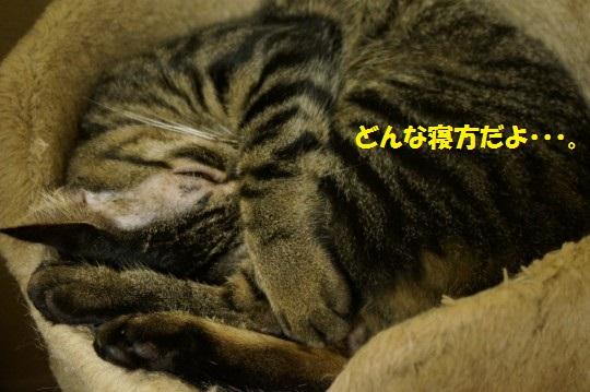 20140909-009.jpg
