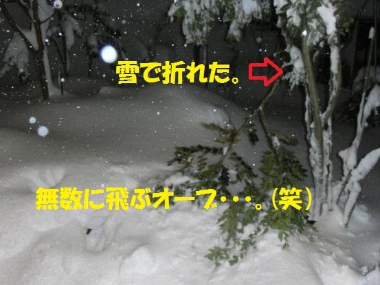 20142-010.jpg