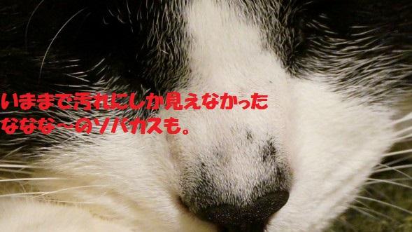 201444-008.jpg