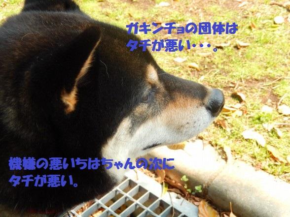 gakinncyo-05.jpg
