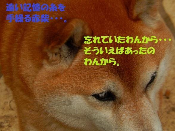 inugoya-02.jpg