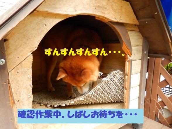 inugoya-03.jpg