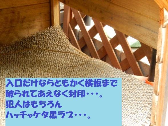 inugoya-04.jpg