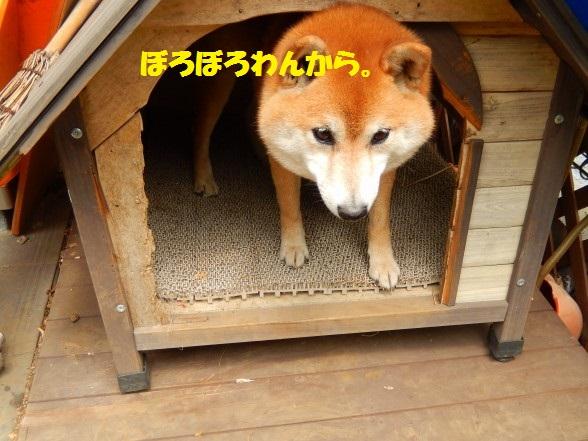 inugoya-06.jpg