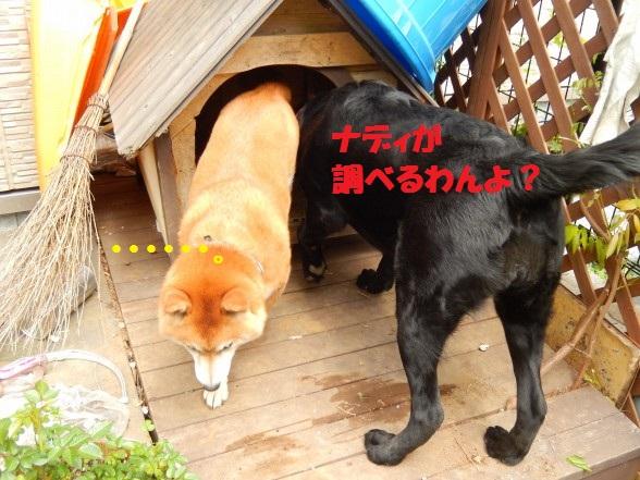 inugoya-07.jpg