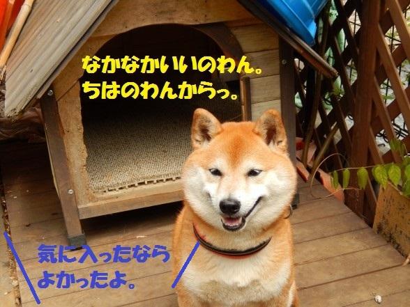 inugoya-11.jpg