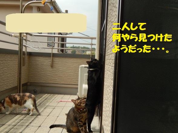 kuro-01.jpg