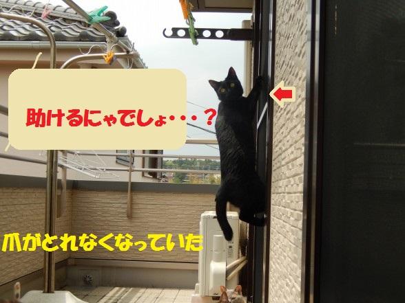 kuro-02.jpg