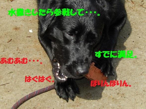 soudann-01.jpg