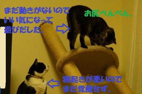 tawa-02.jpg