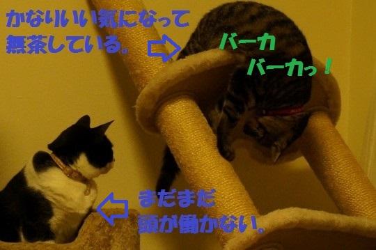 tawa-03.jpg