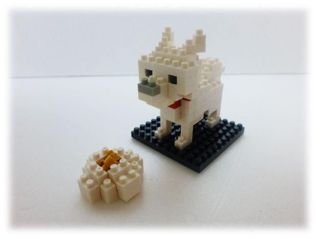 NBC_005 北海道犬