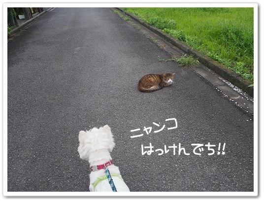 りゅんと猫