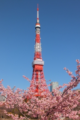 140311河津桜と東京タワー