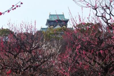 140315大阪城公園梅園③