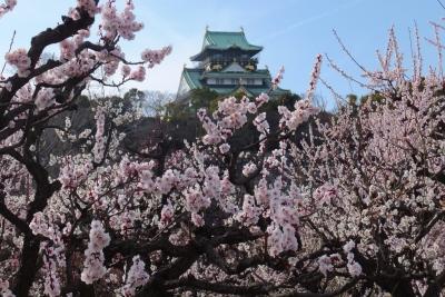 140315大阪城公園梅園②