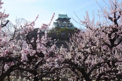 140315大阪城公園梅園①