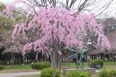 140329大阪城公園のサクラ①